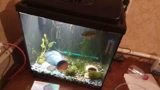 Аэрация в аквариуме. Обзор компрессора Atman AT 1500