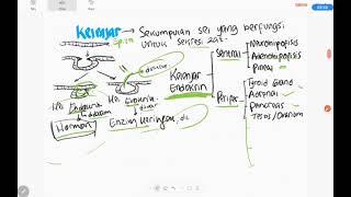 Materi tentang gangguan sistem endokrin pada anak (Ilmu keperawatan) Selamat belajar #gangguan #sist.