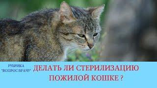 02.03.18 Стерилизация кошки в возрасте 10 лет