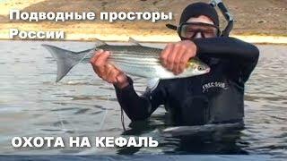 Охота на кефаль Подводные просторы России