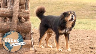 Банхар. Планета собак 🌏 Моя Планета