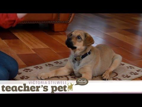 Teach a Puppy to Lie Down | Teacher's Pet With Victoria Stilwell