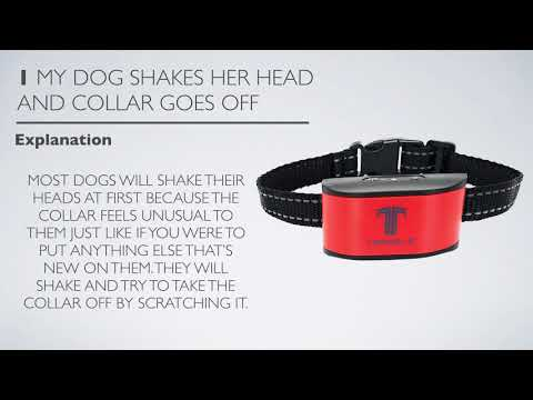 topdale-bark-collar:-troubleshooting-tips