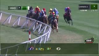 Vidéo de la course PMU PREMIO ONCE VECES