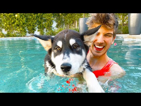 Teaching my Puppy How to Swim!