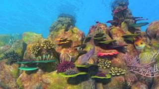 O Mar Não Está Pra Peixe - Tubarões à Vista - Trailer