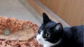 Filomena nervosinha - angry cat