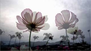 山嵐,菊花,太陽麻.