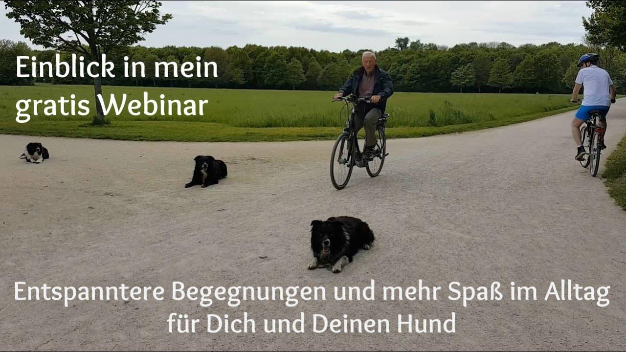 Vorschau Meines Gratis Webinars Wie Du Mit Deinem Hund Ein Tierisch Tolles Team Wirst