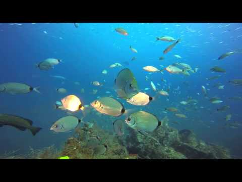Aquarium Shots: Caribsea Point