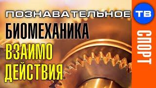 Биомеханика взаимодействия в Целостном движении (Познавательное ТВ, Евгений Беляков)