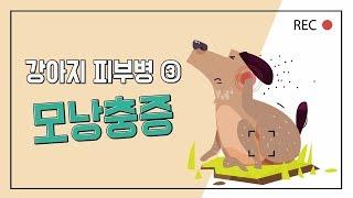 # 강아지 피부병 ③ : 강아지 모낭충 증상과 치료_이…