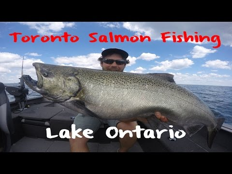 Toronto Salmon Fishing On Lake Ontario