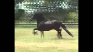 Движение животных