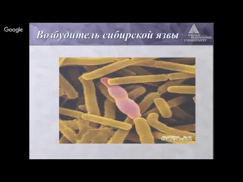 Бактерии: питание, размножение и использование в практике