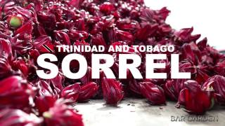 Sorrel from Trinidad & Tobago