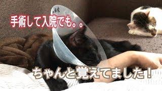黒猫くろすけ手術から帰宅 thumbnail