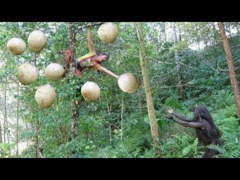 Survival skills primitive life - Forest people meet ethnic girl picking natural fruit