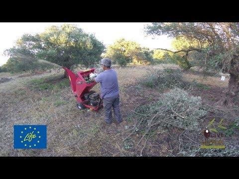 Ολιστική διαχείριση ελαιώνα / Holistic olive grove management