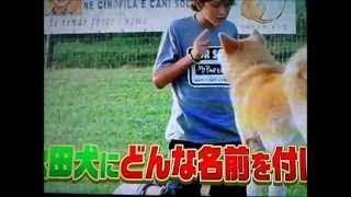 イタリアで日本の秋田犬が人気者になっている。ある映画がきっかけとな...
