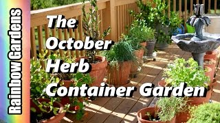 Tour & Tips for the Herb Container Garden in October - Cilantro, Spinach, Chervil, Aphids, & Mites!