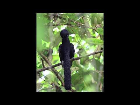 Earth - The ten sexiest male birds