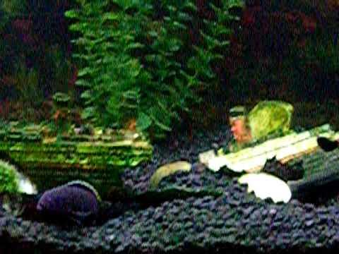 Cichlid Tank Salt African Cichlid Tank And