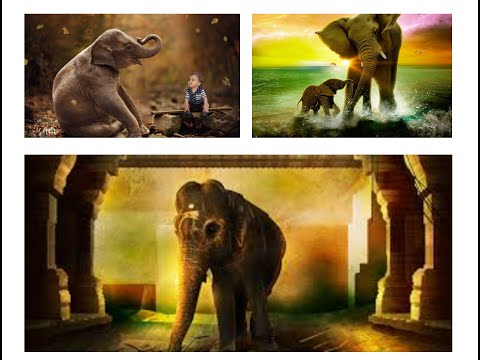 Why elephant is Known as the God?