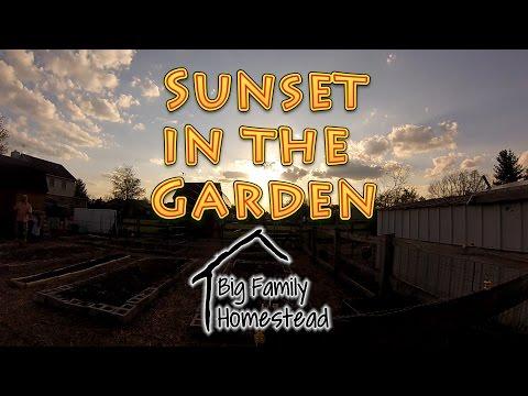 Sunset in the Garden HD