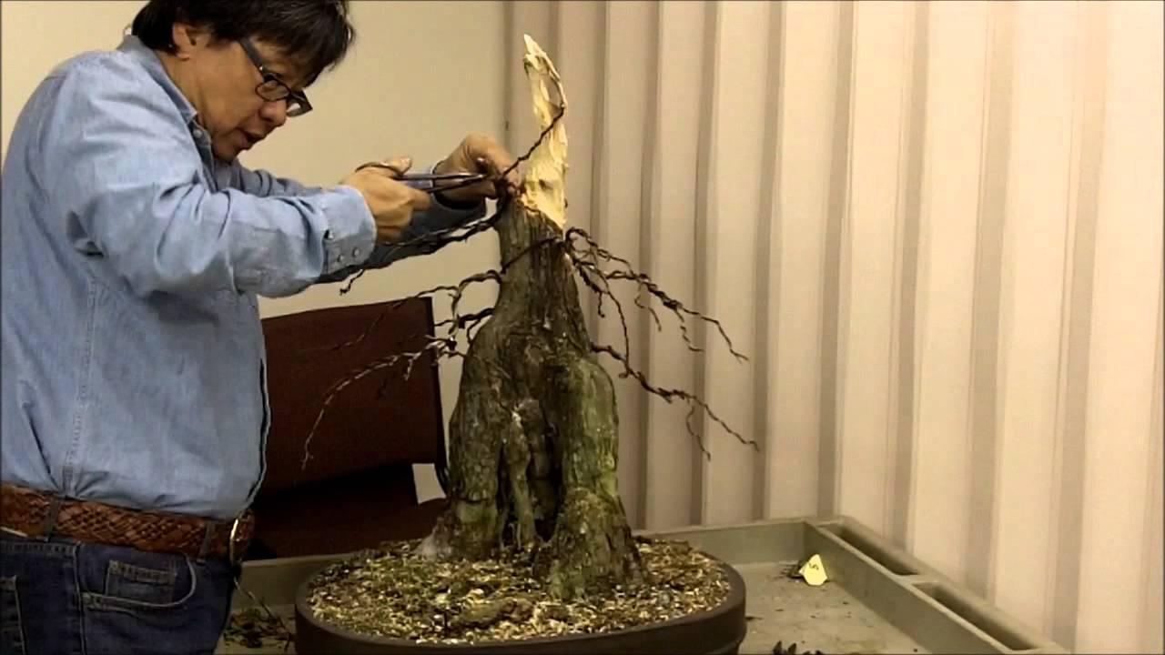 Joy Of Bonsai 2012 Workshop With Suthin Sukosolvisit Bald Cypress Youtube