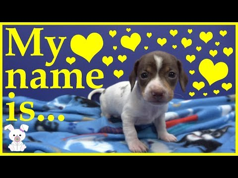 name-my-puppy-#1---name-reveal!-the-votes-are-in!!-|sugarbunnyhops