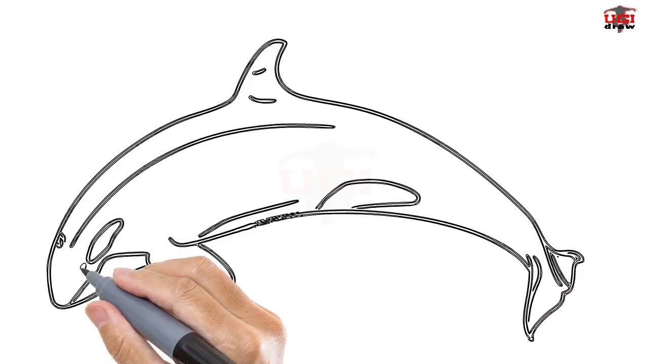 How to Draw a Killer Whale Easy Step By Step Drawing ...