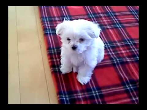 귀여운 강아지 조는 영상