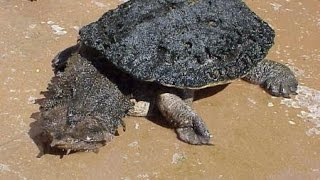 10 Slowest Animals In The World