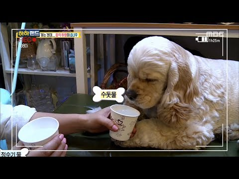 [Haha Land] 하하랜드 - Puppy eating snacks quietly 20171213