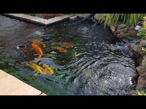 Koi pond and eazi pod filtration system with homemade Bakki shower (sept 2017)