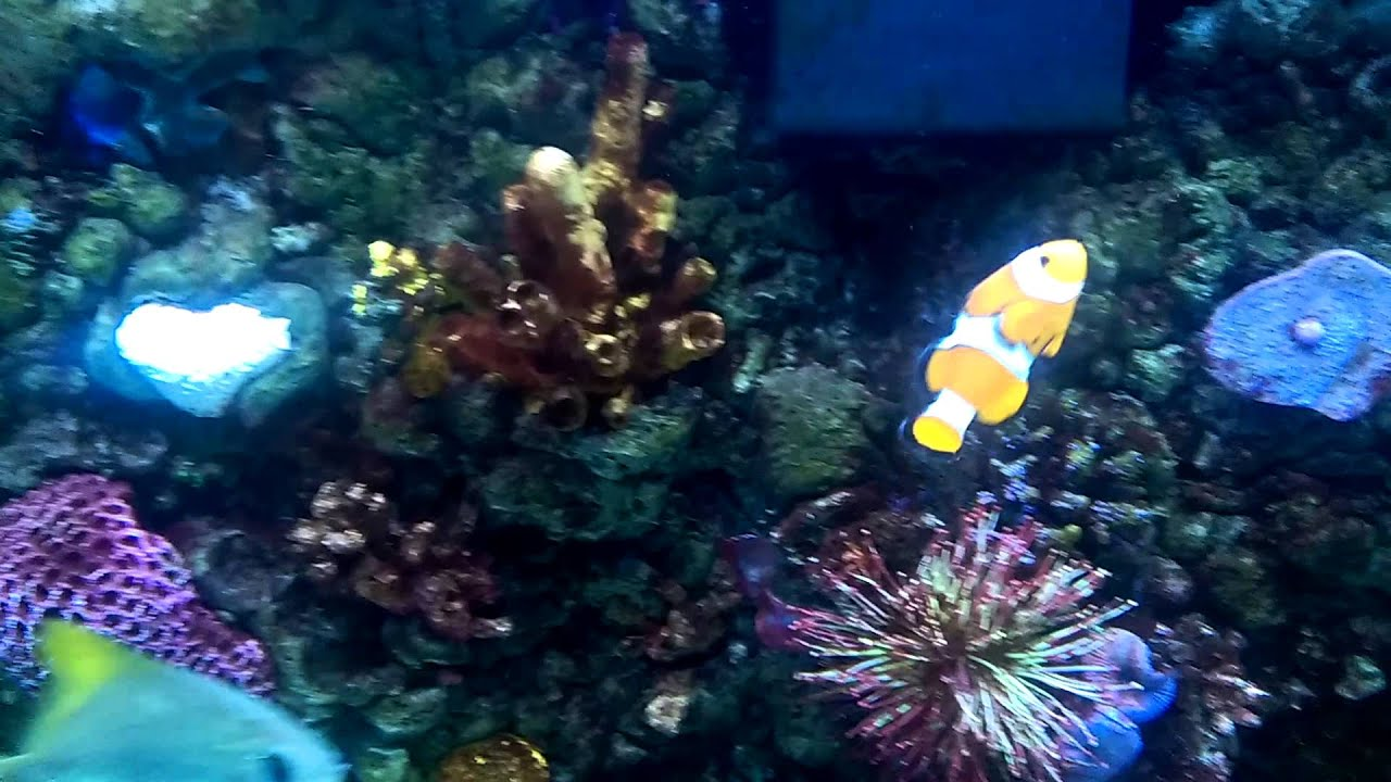 180 gallons saltwater fish only tank   YouTube