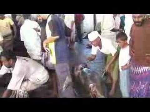 Yemen - Hodeidah Shark Market