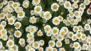 Очень красивый цветок   не знаю как называется(Подскажите, что за цветы??, 2014-09-25T10:05:53.000Z)