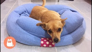 DIY dog bed tutorial - Make a dog bed with a sweater