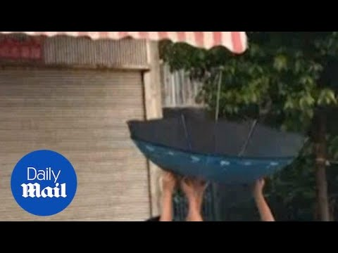 Two Chinese students use an umbrella to rescue a kitten on a canopy - Daily Mail