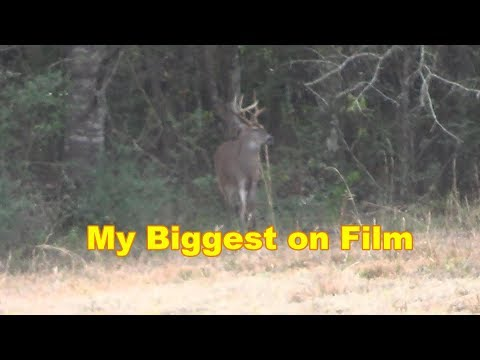 Deer Hunting 2019 || Big Florida Buck Down