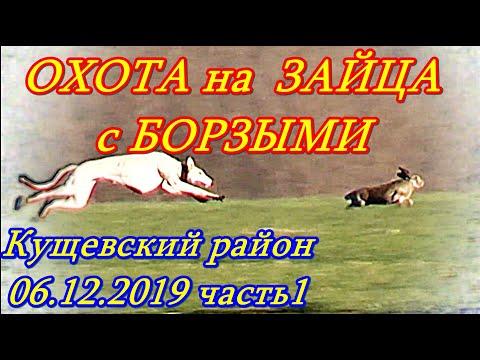 Кущевские испытания борзых 06 12 2019г  часть1