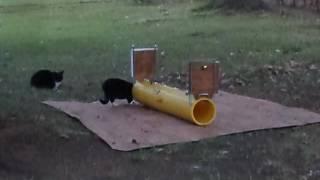 RURA GAZOWA SAMOCZYNNIE ŁAPIĄCA KOTY - koty sprawdzają działanie w praktyce : 7.12.2016 .
