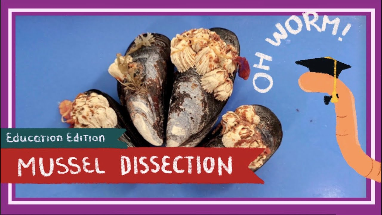 Mussel (& Barnacle) Dissection || Of the Crow-Blue Mussel Shells