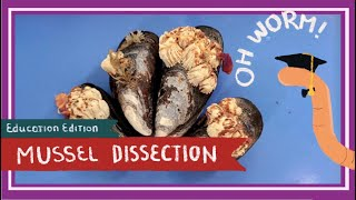 Mussel (& Barnacle) Dissection || Of the Crow-Blue Mussel Shells [EDU]