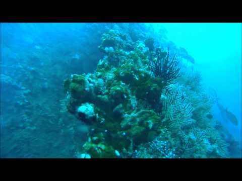 Cata Black Coral Divers 8 6 14 hi res