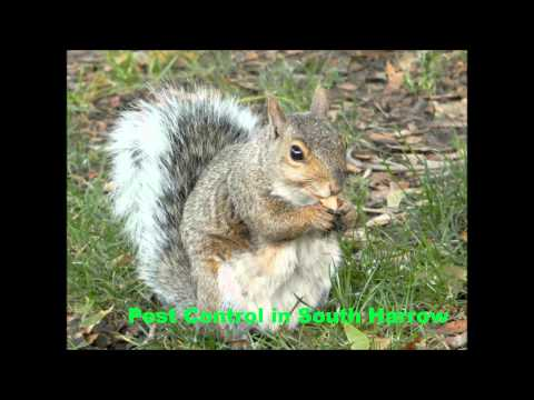 Pest Control in South Harrow