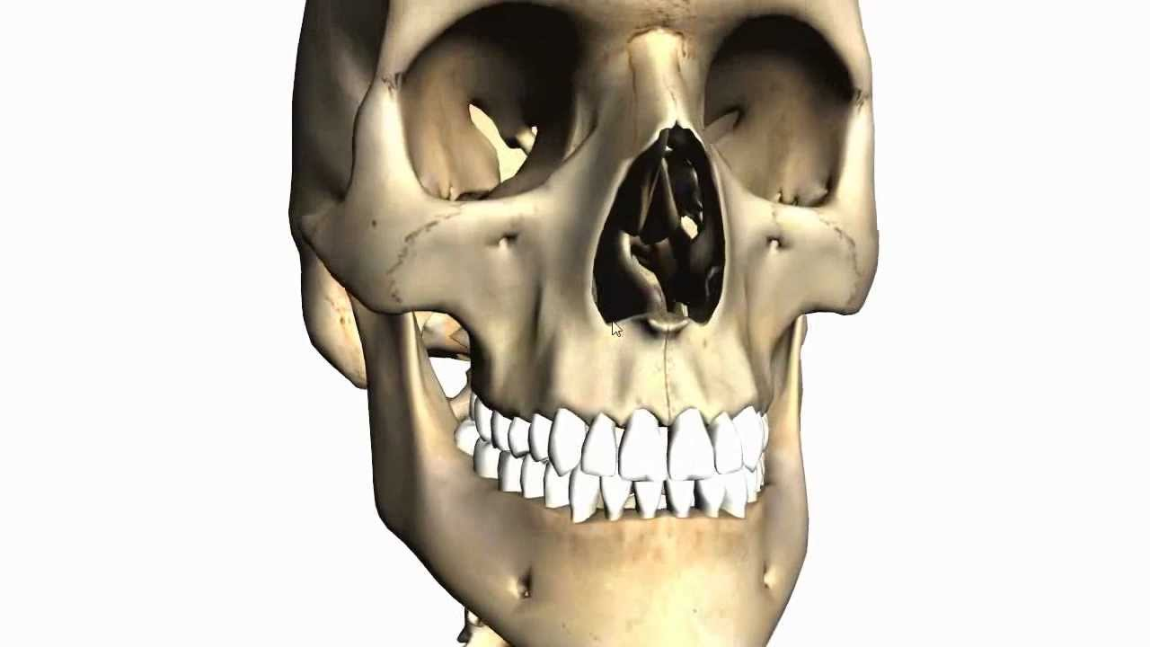 Foramina of the Skull and Cranial Fossae - Anatomy Tutorial PART 1 ...