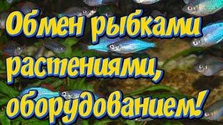 Обмен, продажа аквариумных  рыбок,  растений, оборудования, декораций! Ваши пожелания и предложения!